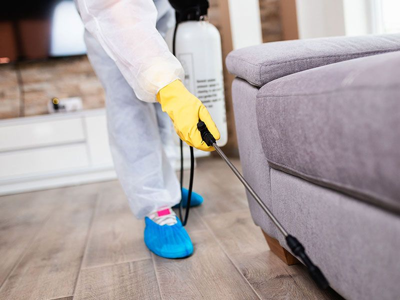 Futuristic Pest Control for  Property